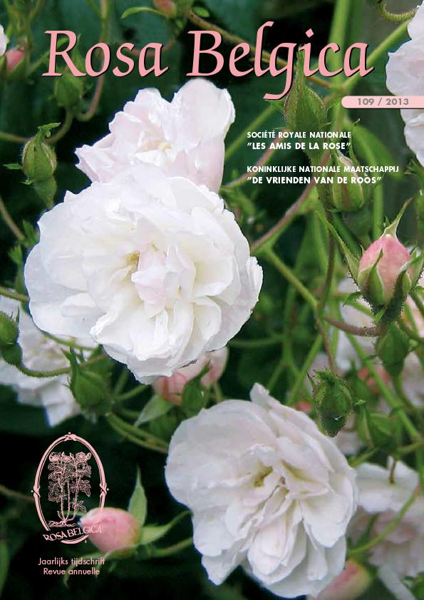 rose belgica