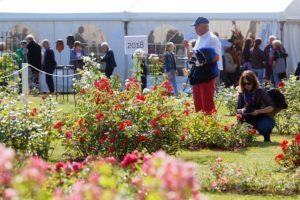 Photos du 56e Concours International de Roses Nouvelles du Roeulx
