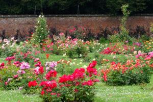 58ème Royal Concours International de Roses Nouvelles de la Ville du Roeulx
